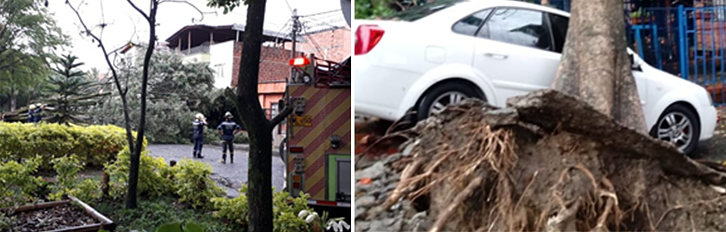 Figure 2 Tree failure on Calazans neighbourhood due to high rainfall intensity on 11th March_2019 leave several damages to infrastructure_