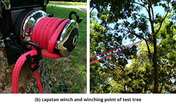Figure 5 b) capstan winch and winching point of test tree.(b)